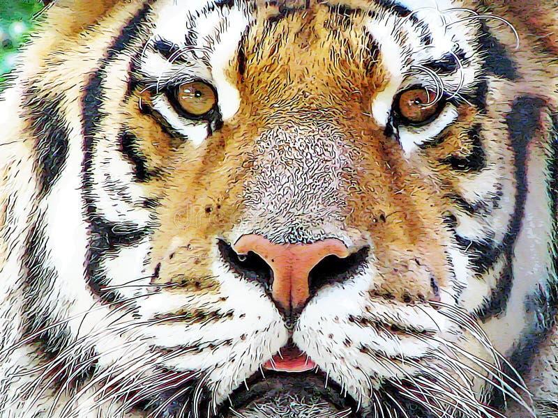 Panthera tigris do tigre dos desenhos animados ilustração do vetor