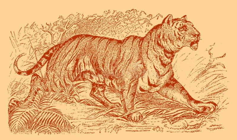 Panthera tigris do tigre que anda em uma paisagem com arbustos, gramas e árvores ilustração royalty free