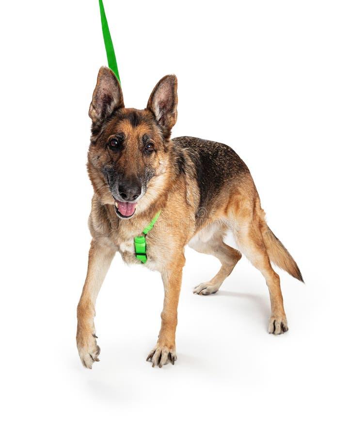Panting Dog Stock Image. Image Of Head, Looking, Mammal