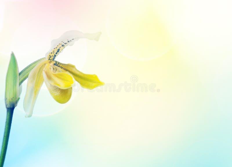 Pantoufle de dame jaune et blanche photos libres de droits