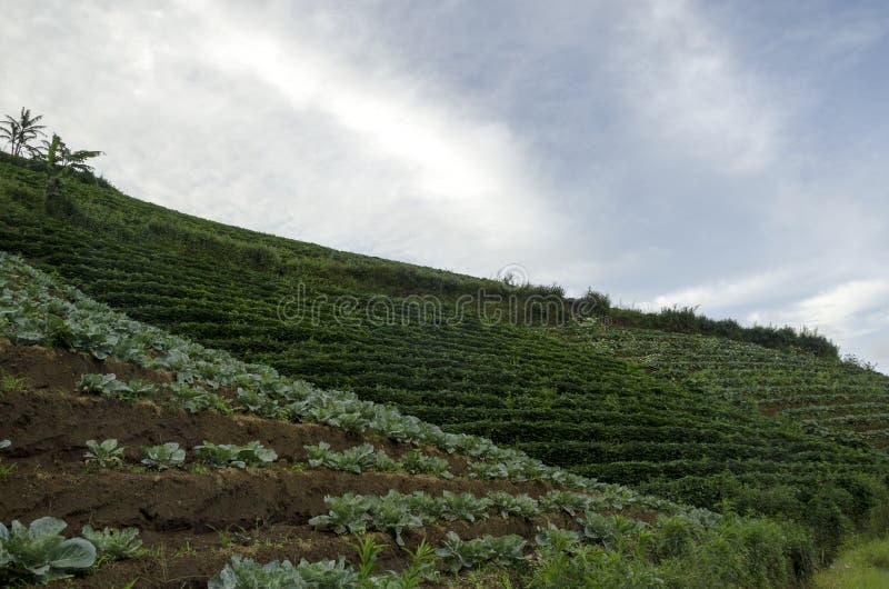 Panyaweuyan. Argapura, West Java - Indonesia royalty free stock photography