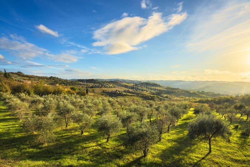 Panzano im Olivenbaum- und Weinbergsonnenuntergang des Chiantis Toskana, Ita stockbild
