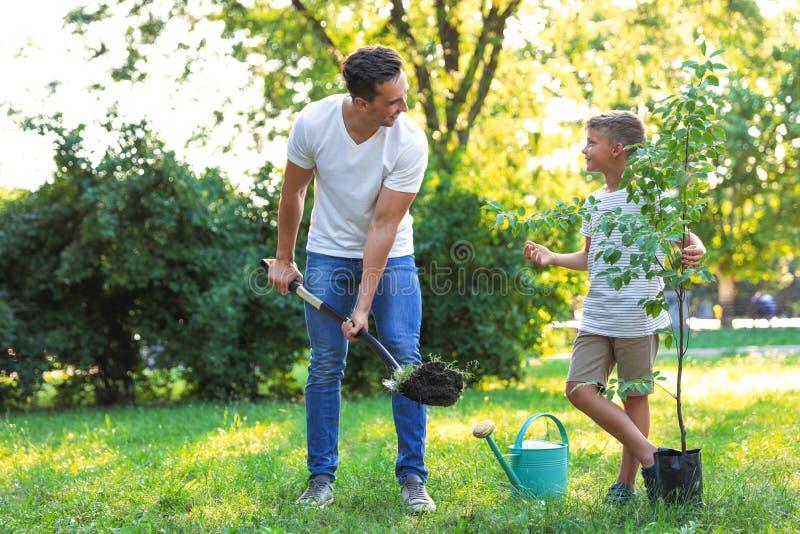 Papà e figlio che piantano albero in parco su soleggiato fotografia stock