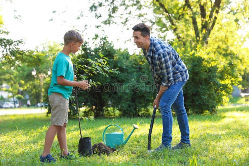 Papà e figlio che piantano albero in parco su soleggiato fotografia stock libera da diritti