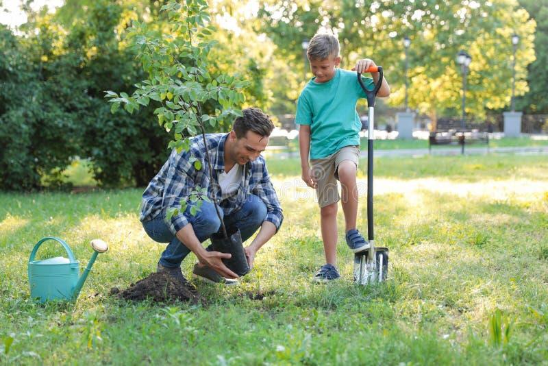 Papà e figlio che piantano albero in parco su soleggiato immagine stock