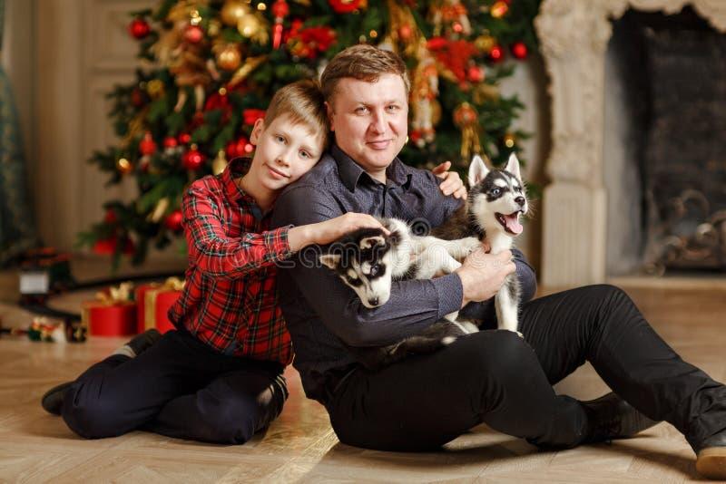 Papà e figlio con i cuccioli Husky Christmas che si siede su un fondo immagine stock libera da diritti