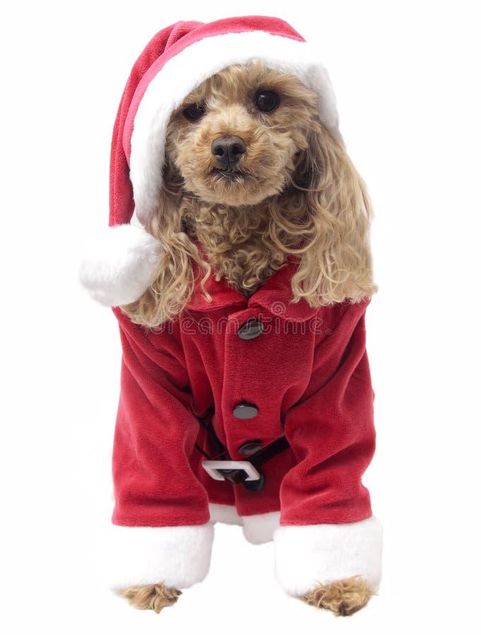 Papá Noel Cutie foto de archivo libre de regalías