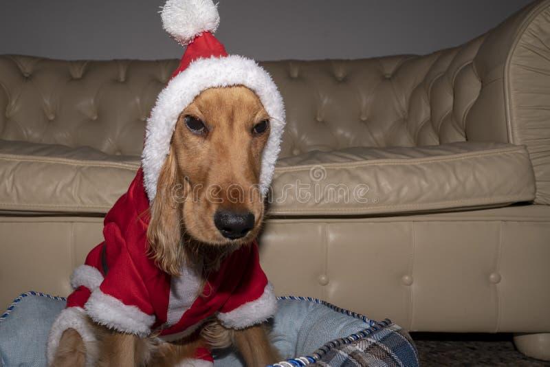 Papá Noel vistió la Navidad recién nacida del perro de perrito imagen de archivo