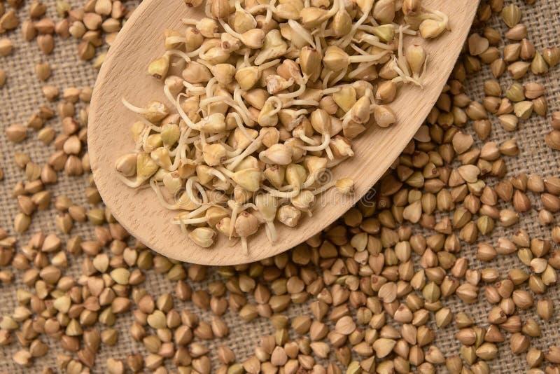 Papa de aveia do trigo mourisco Colher de madeira Brotos do cereal Fundo de Brown foto de stock royalty free