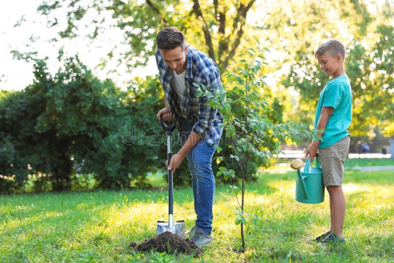 Papa en zoon die boom in park planten stock foto's