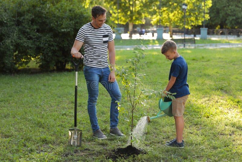 Papa en zoons het water geven boom in park royalty-vrije stock foto's