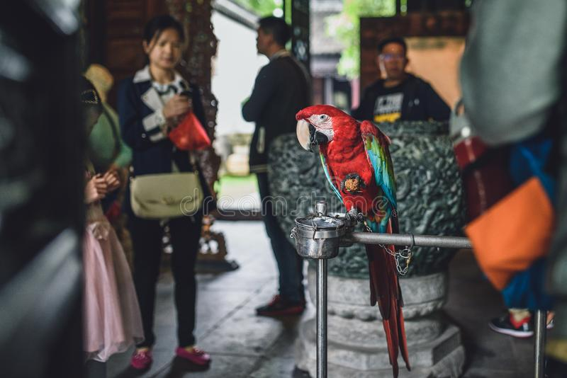 Papagaio acorrentado na cidade antiga de Zhujiajiao, China imagens de stock royalty free