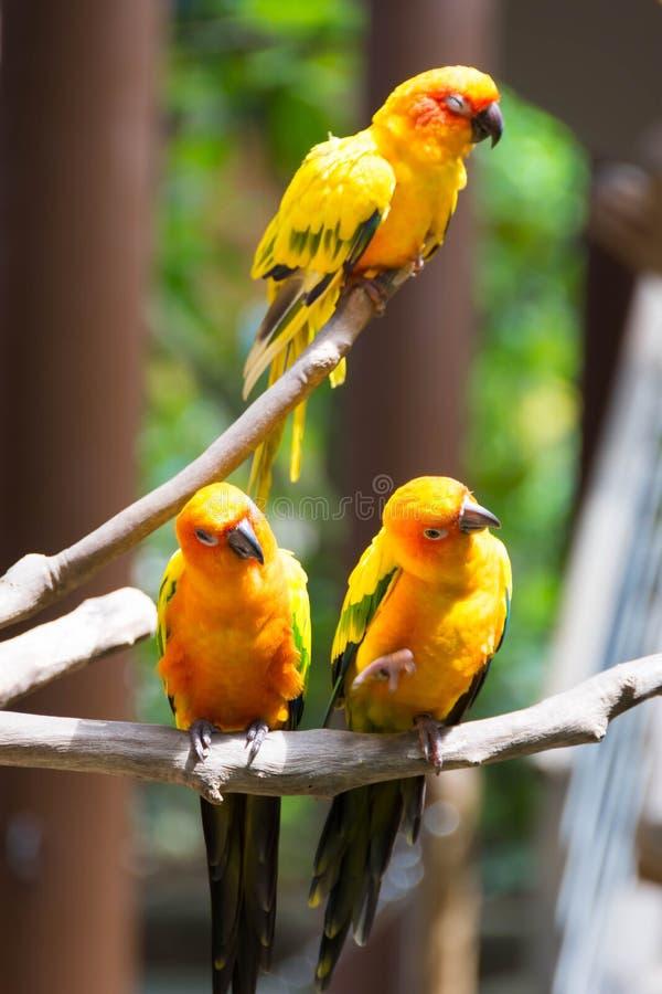 Papagaio amarelo ou arara vermelha e verde em um parque fotos de stock royalty free