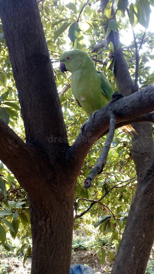 Papagaio bonito na árvore fotografia de stock royalty free