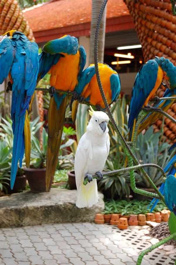 Papagaio branco no jardim tropical de Nong Nooch fotos de stock royalty free