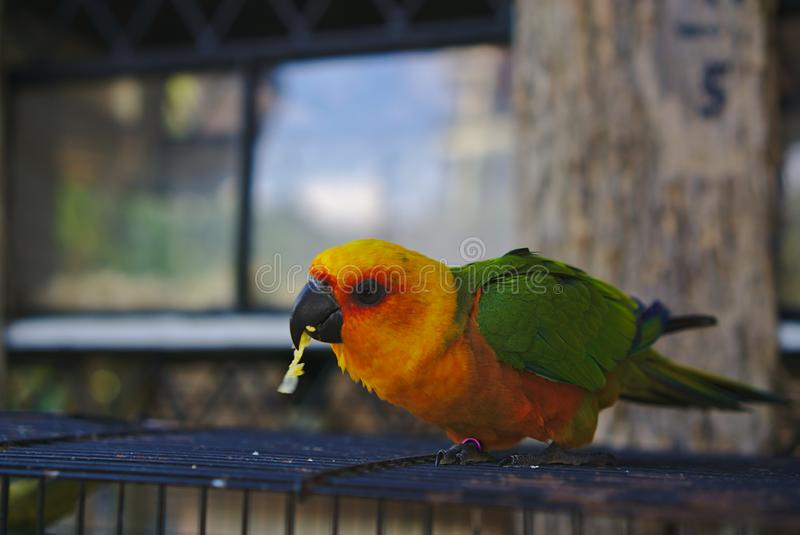 Papagaio colorido verde e amarelo foto de stock
