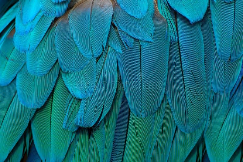 Papagaio-como multicoloured, o azul do ½ do ¿ do ï empluma-se foto de stock royalty free
