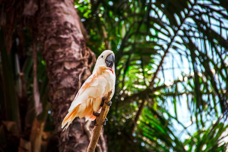 Papagaio cor-de-rosa na floresta tropical imagem de stock