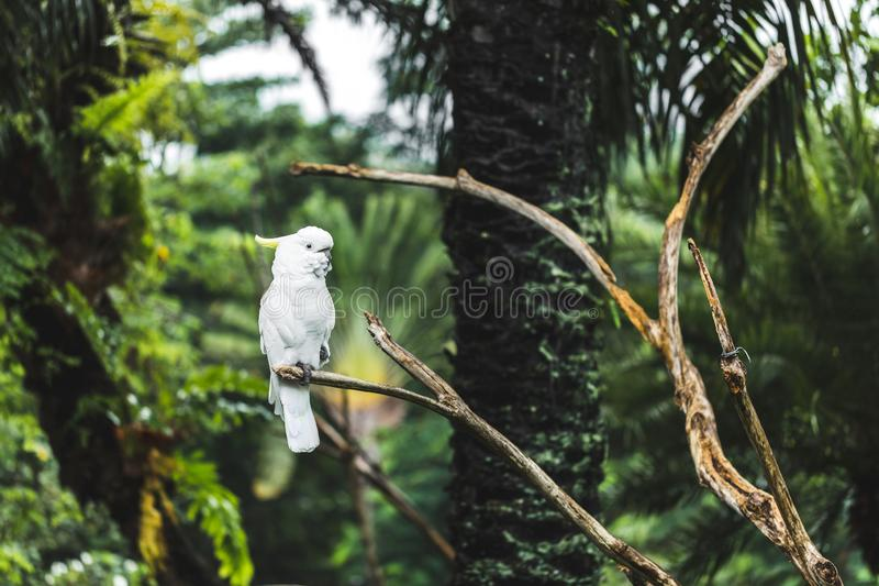 Papagaio de cacatua amarelo-com crista branco em um ramo foto de stock