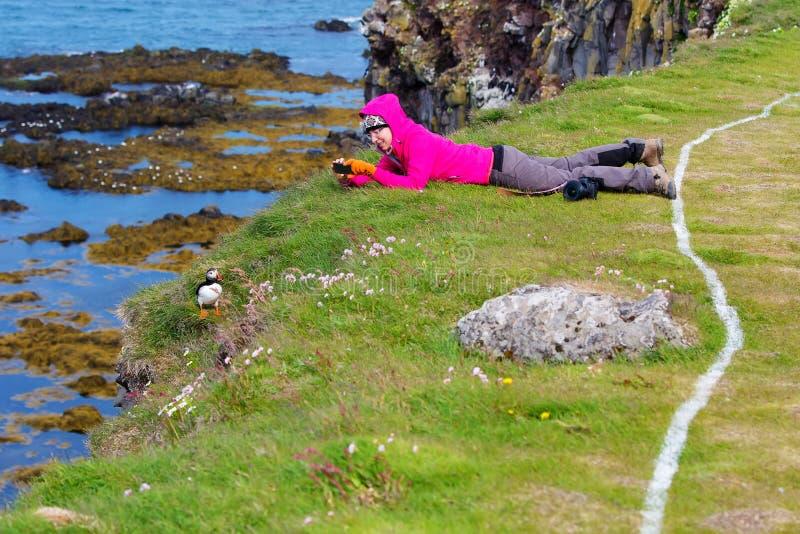 Papagaio-do-mar atlântico bonito em Islândia foto de stock royalty free