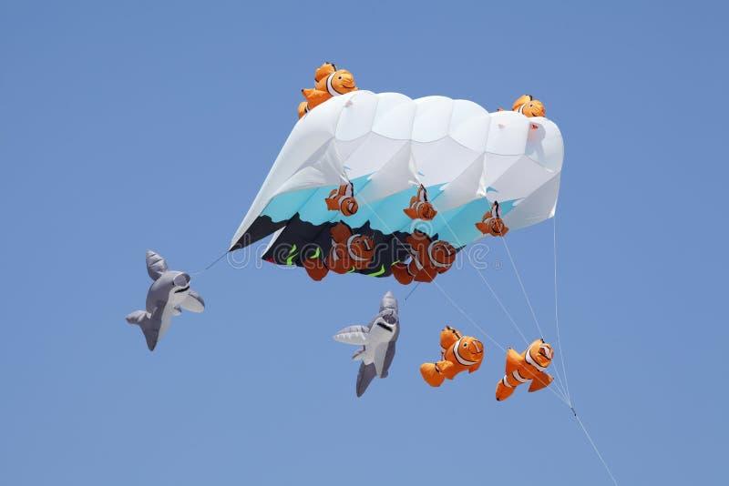 Papagaio dos peixes do divertimento fotos de stock royalty free
