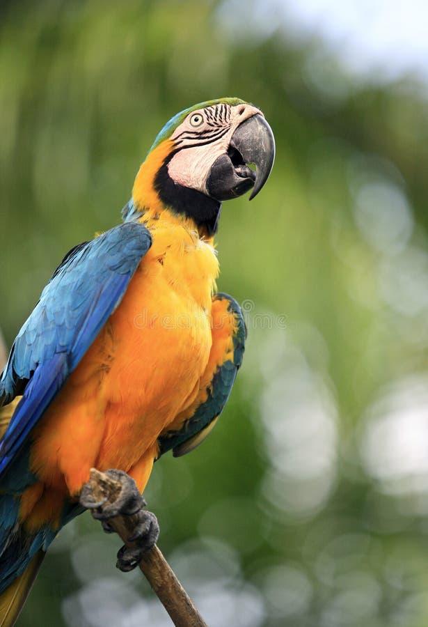 Papagaio em uma filial fotografia de stock royalty free