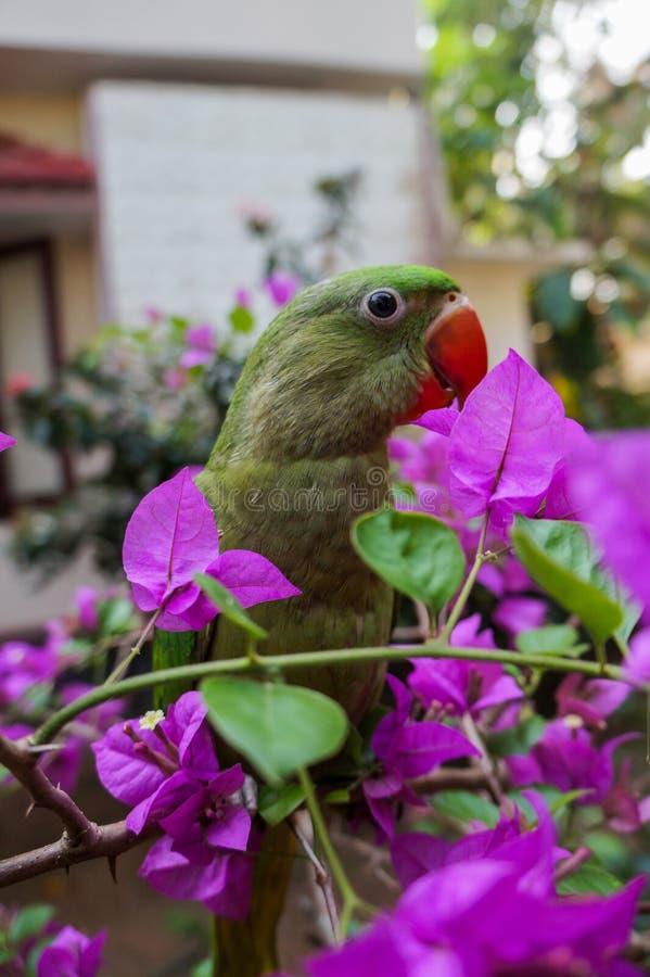 Papagaio em uma planta imagens de stock royalty free
