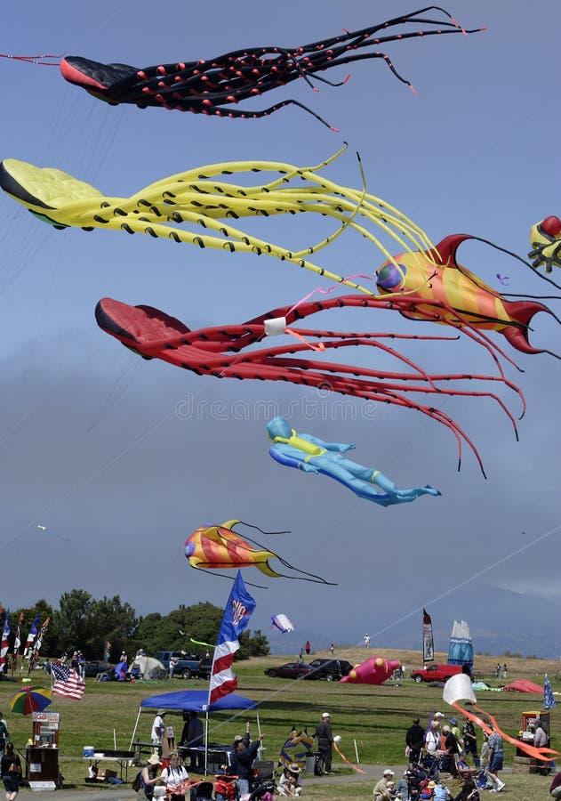 Papagaio Fest 03 foto de stock