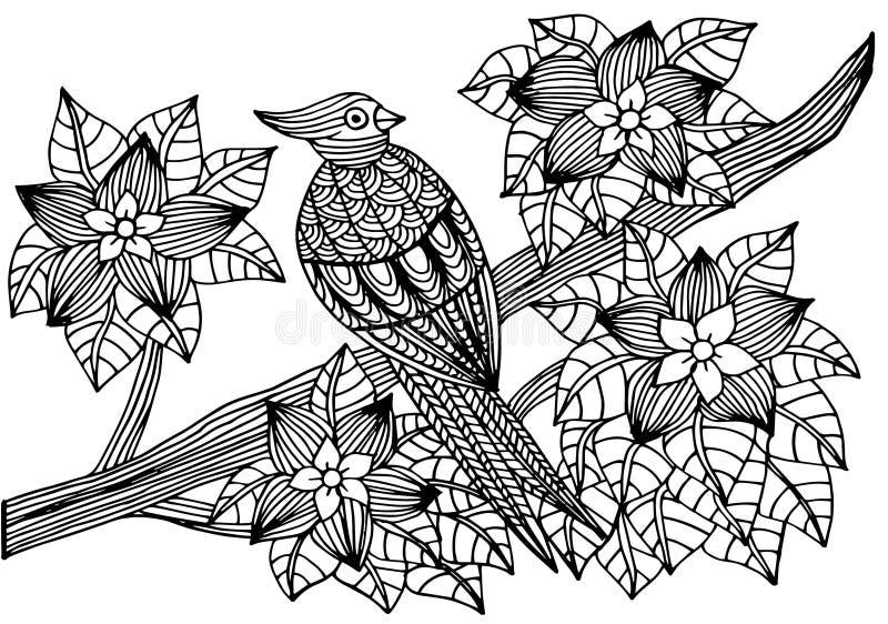 Papagaio, flores e folhas tropicais Página do livro para colorir para adultos e crianças, terapia da arte Desenho de esboço, gara ilustração royalty free