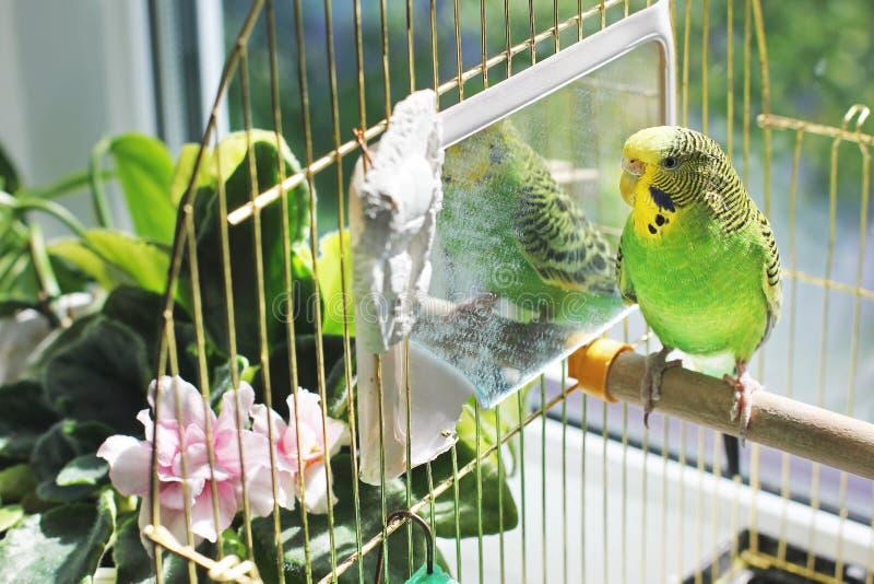 Papagaio grande em uma gaiola fotos de stock