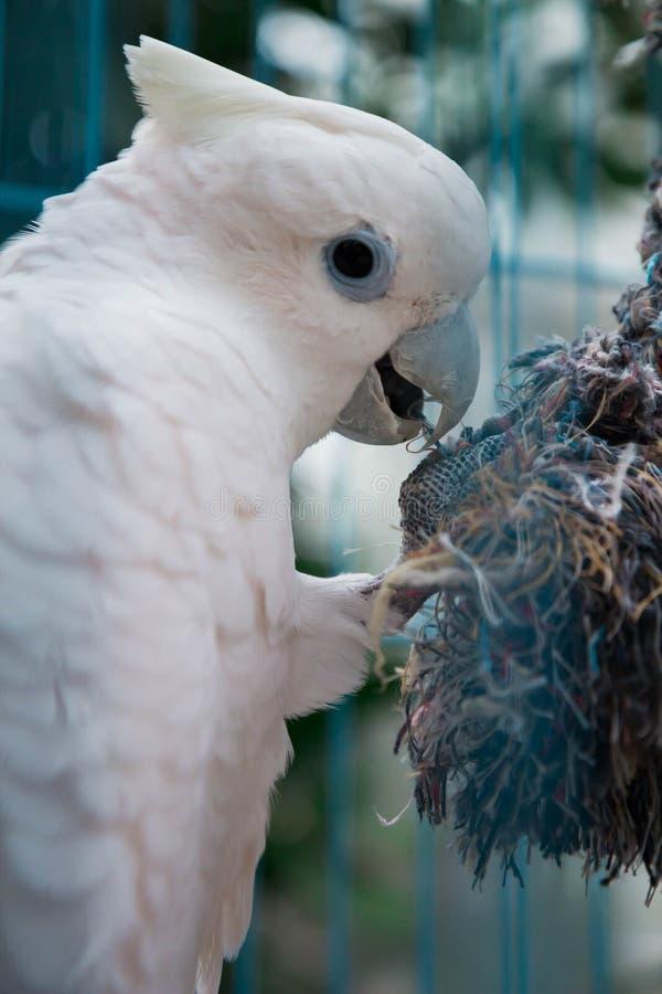Papagaio grande em uma gaiola imagem de stock royalty free