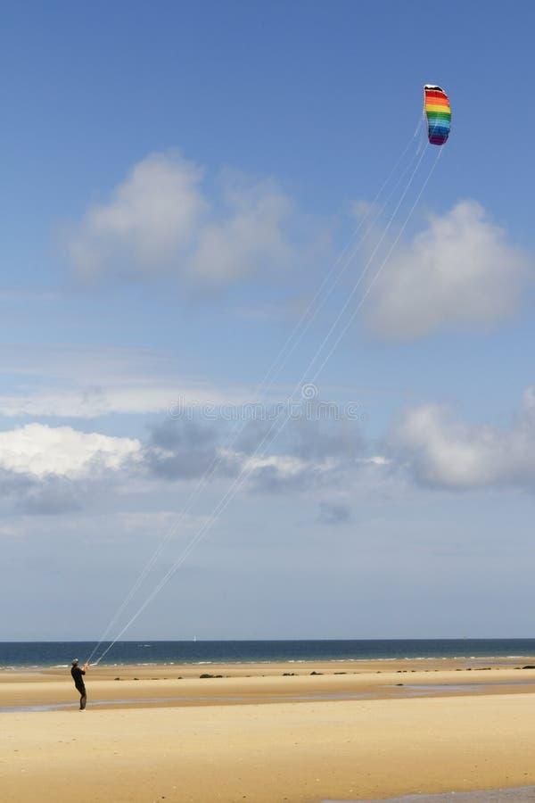 Papagaio na praia imagem de stock