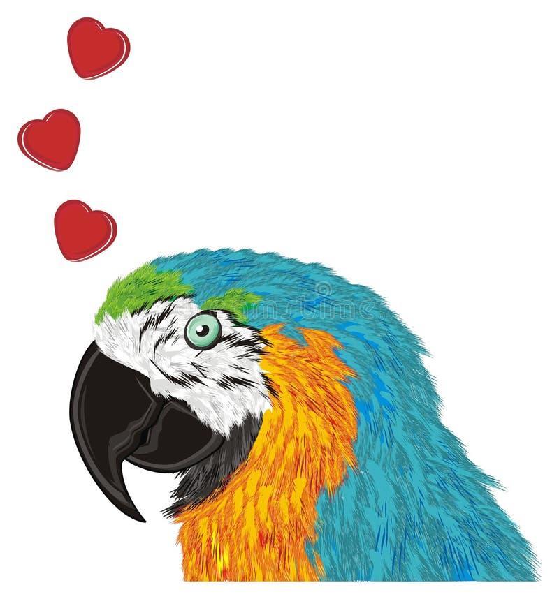Papagaio no amor ilustração do vetor