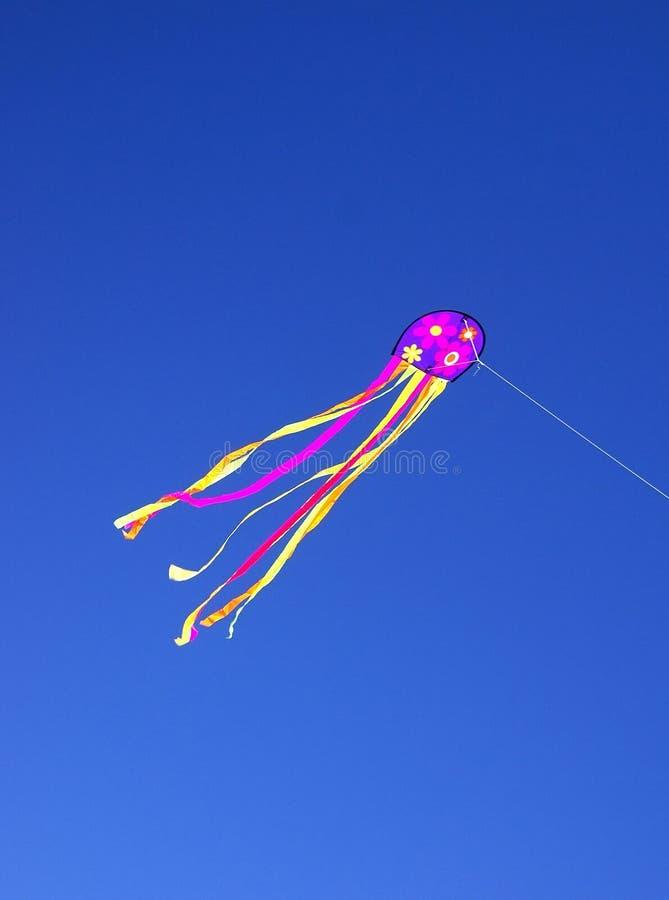 Papagaio no céu azul fotos de stock royalty free