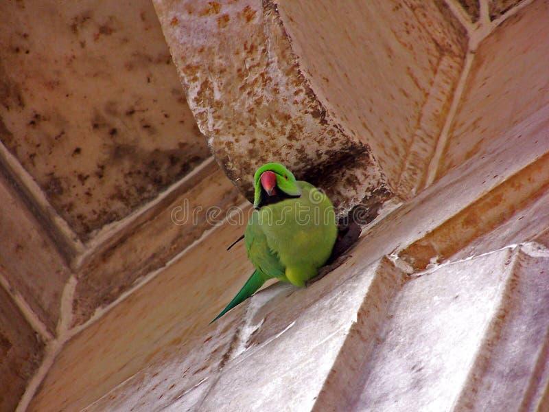 Download Papagaio no forte antigo foto de stock. Imagem de parakeet - 63012