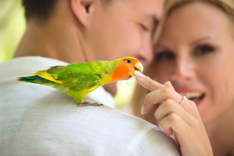 Papagaio no ombro imagens de stock royalty free