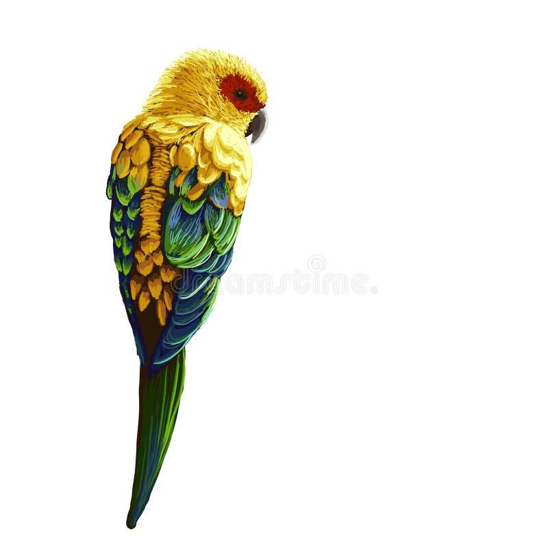 Papagaio pintado brilhante ilustração stock