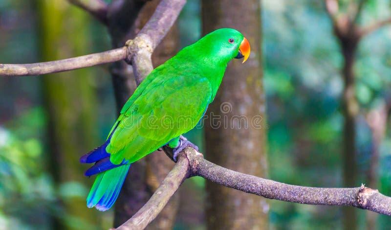 Papagaio verde imagem de stock
