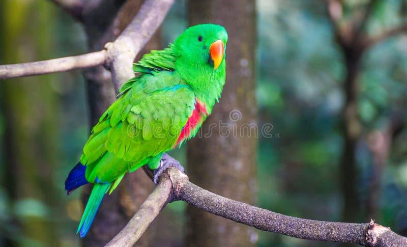 Papagaio verde 2 imagem de stock