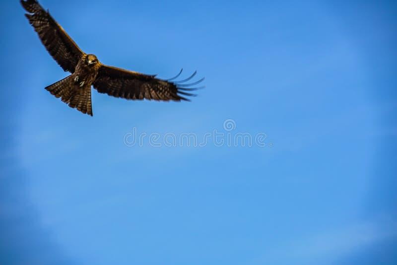 Papagaio a voar no céu imagem de stock