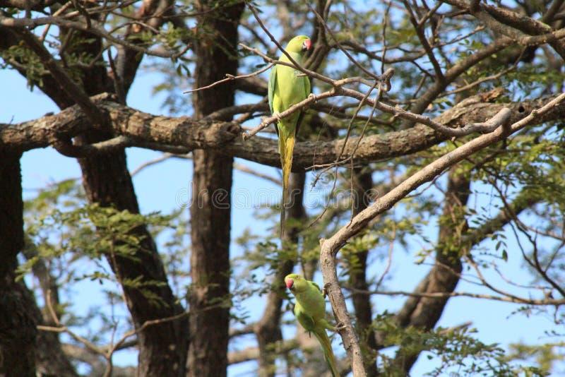 Papagaios bonitos nas madeiras fotos de stock
