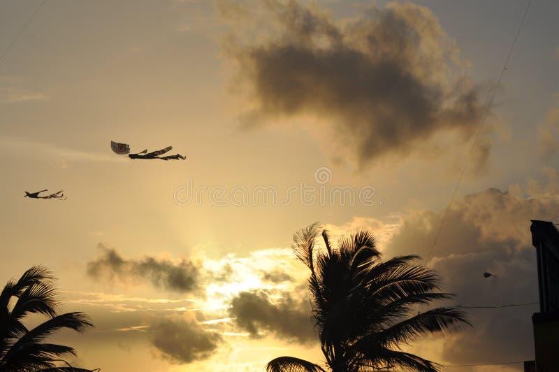Papagaios bonitos no céu Céu cingalês foto de stock