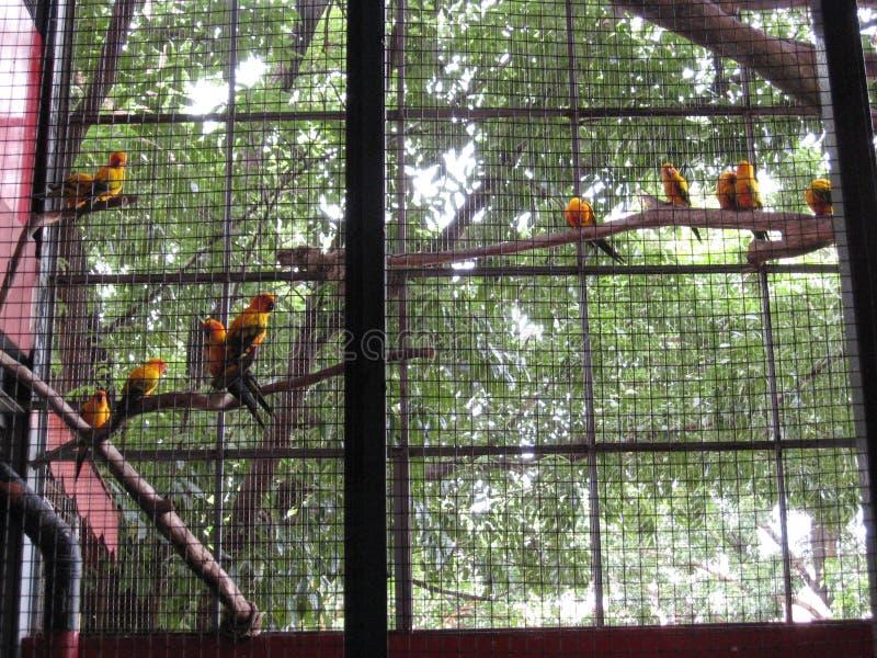 Papagaios coloridos em um aviário no parque do oceano de Manila, Manila fotos de stock royalty free
