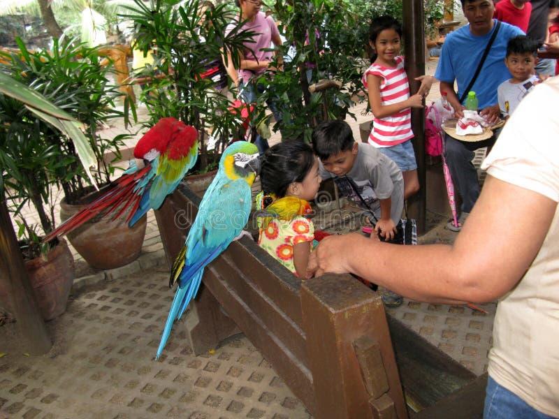 Papagaios coloridos, jardim zoológico de Manila, Manila, Filipinas imagens de stock royalty free