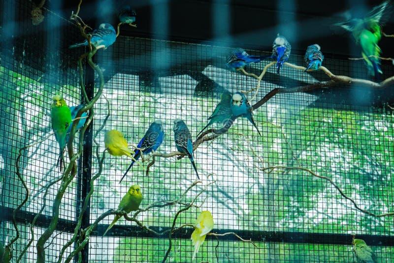 Papagaios coloridos na gaiola foto de stock