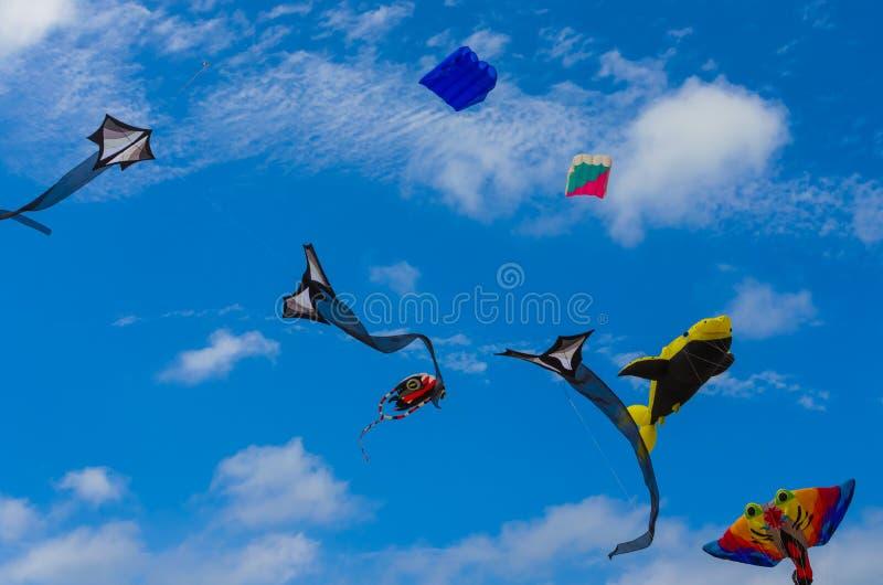 Papagaios coloridos no festival do papagaio do Rosebud imagens de stock royalty free