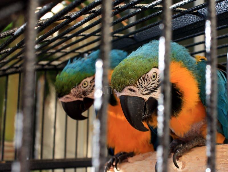 Papagaios em uma filial foto de stock royalty free