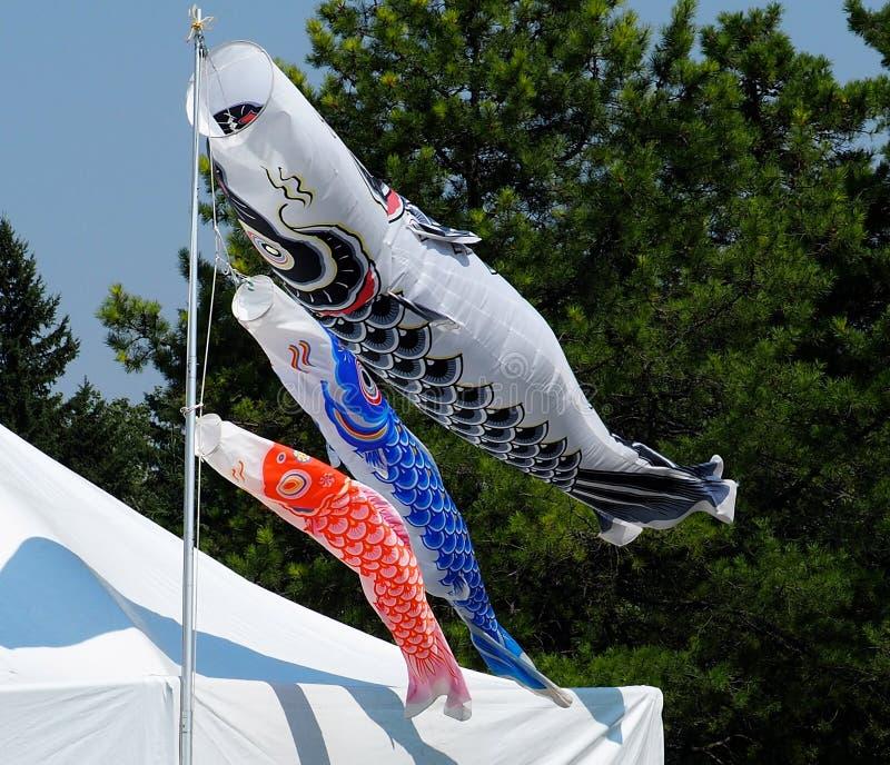 Papagaios japoneses coloridos que fundem no vento imagem de stock royalty free