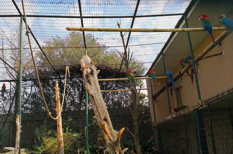 Papagaios no jardim zoológico de Faruk Yalcin em Istambul foto de stock