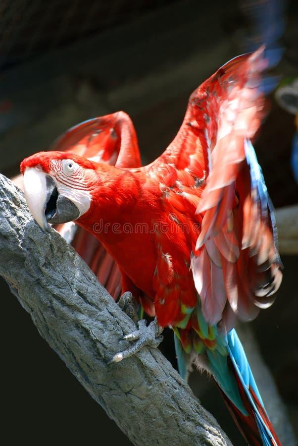 Papagei auf dem Baum stockfotografie
